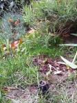 Buse enterrée (pas l'oiseau) pour l'arrosage de la pelouse
