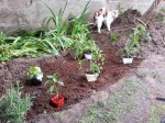Des plants prêt à se faire planter